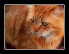 Miau! (Juanjo Cruz) Tags: pet eye animal cat feline raw gimp gato felino meow mascota miau rawtherapee ojoolympus