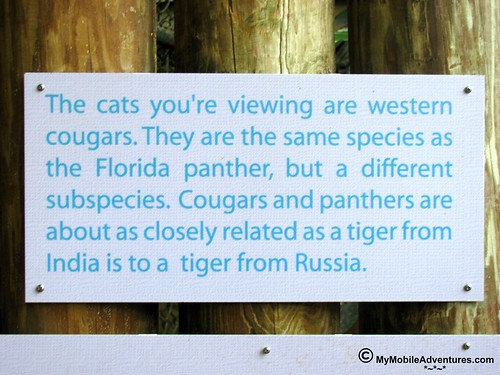 IMG_2068-Naples-Florida-zoo-western-cougar-sign