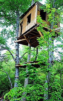 hillock-treehouse