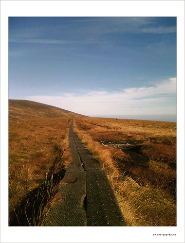 On the boardwalk/Wicklow Way