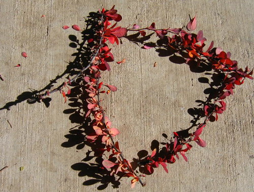 A triangle of barberry branches