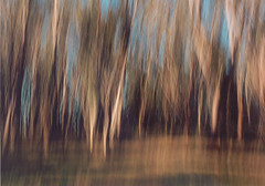 Impressionist Photography / ICM (Cecilia Temperli) Tags: nationalpark logging conservation australia nsw newsouthwales nikonfm2 murrayriver icm rivermurray impressionistphotography riverredgums intentionalcameramovement