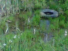 Cat tails and tires (ruffiesgirl98) Tags: house abandoned decay kentucky