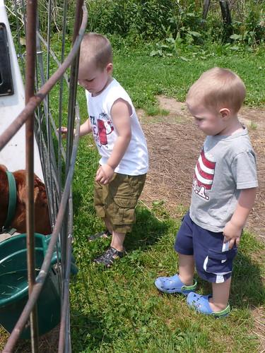 Visiting a farm