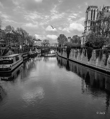 quiet morning (Jack_from_Paris) Tags: r0002327bw ricoh gr apsc capture nx2 lr monochrom noiretblanc street bw wide angle la seine eau fleuve reflets nuages clouds paris matin morning light ile de cité notre dame cathédrale church église mouette mail 28mm blackandwhite monochrome