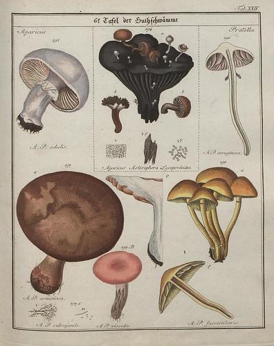 Das System der Pilze und Schwämme, 1817 h