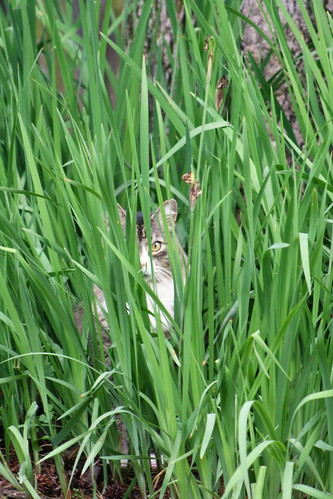 Hobbes tall grass