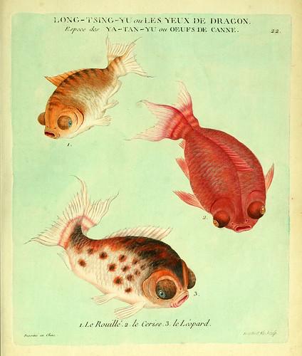 008-El herrumbroso el cereza y el leopardo-Histoire naturelle des dorades de la Chine-Martinet 1780