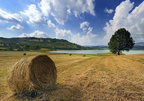 フリー画像| 自然風景| 干し草ロール| イタリア風景|        フリー素材|