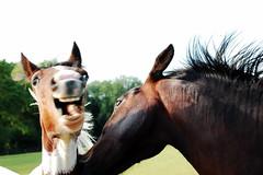 Happy horse iz happy!