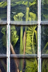 Coexistence (gherm) Tags: plants paris france green glass canon vert coexistence pane gettyimages plantes verre vitre serres glasshouses auteuil gherm formatportrait greehouses eos40d 0906179917
