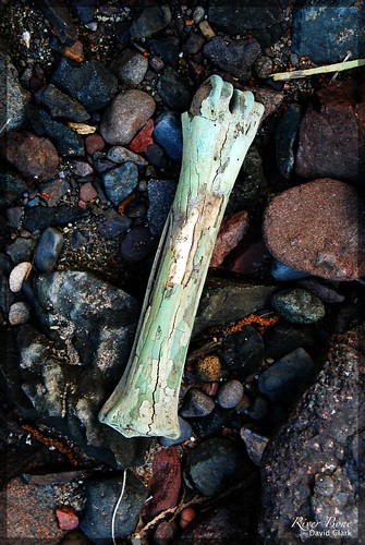 A very old bone with a cracked and weathered outer layer, laying on a bed of river rocks.