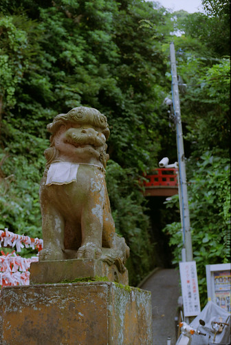 enoshima dog