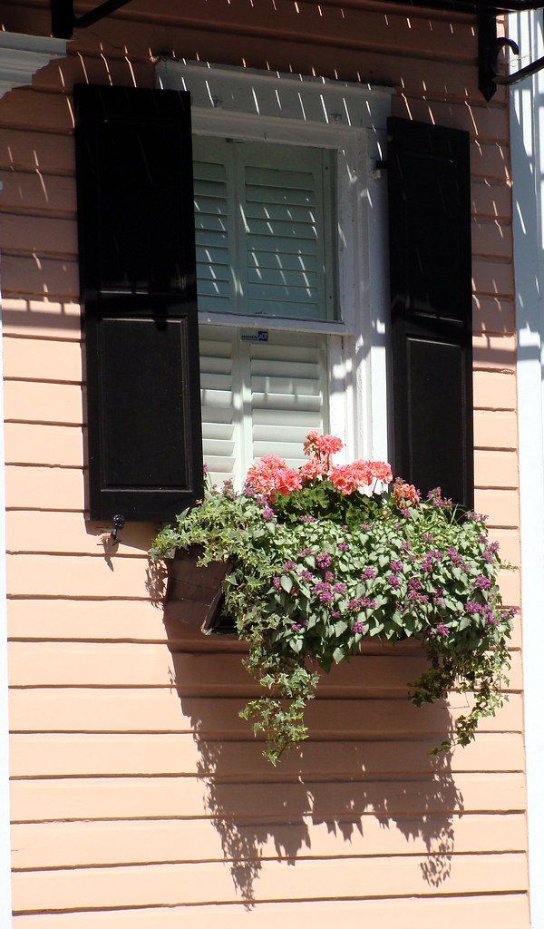 window with black shutters, flowers, Charleston, South Carolina, USA