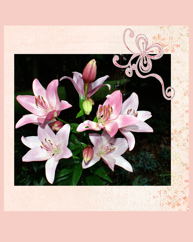 pink-saturday-pink-lilies-2