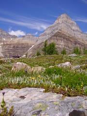 Pinnacle Mt. (CDK in Calgary) Tags: lake valley larch moraine