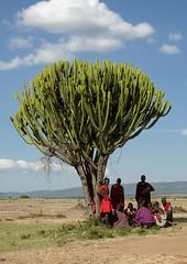 Maasai men sheltering from the sun under a tree - Kenya (Eric Lafforgue) Tags: africa kenya culture tribal tribes afrika tradition massai tribe ethnic kenia maasai tribo headdress afrique headwear ethnology headgear tribu eastafrica quénia 7883 lafforgue ethnie ケニア quênia كينيا 케냐 кения keňa 肯尼亚 κένυα кенија кенијa