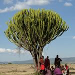 Maasai men sheltering from the sun under a tree - Kenya