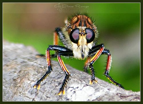 Macro Monday-Bug