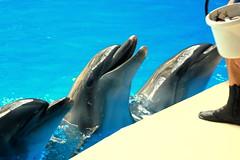 (nilgun erzik) Tags: istanbul dolphinarium fotografkraathanesi fotografca biyerlerde agustos2009