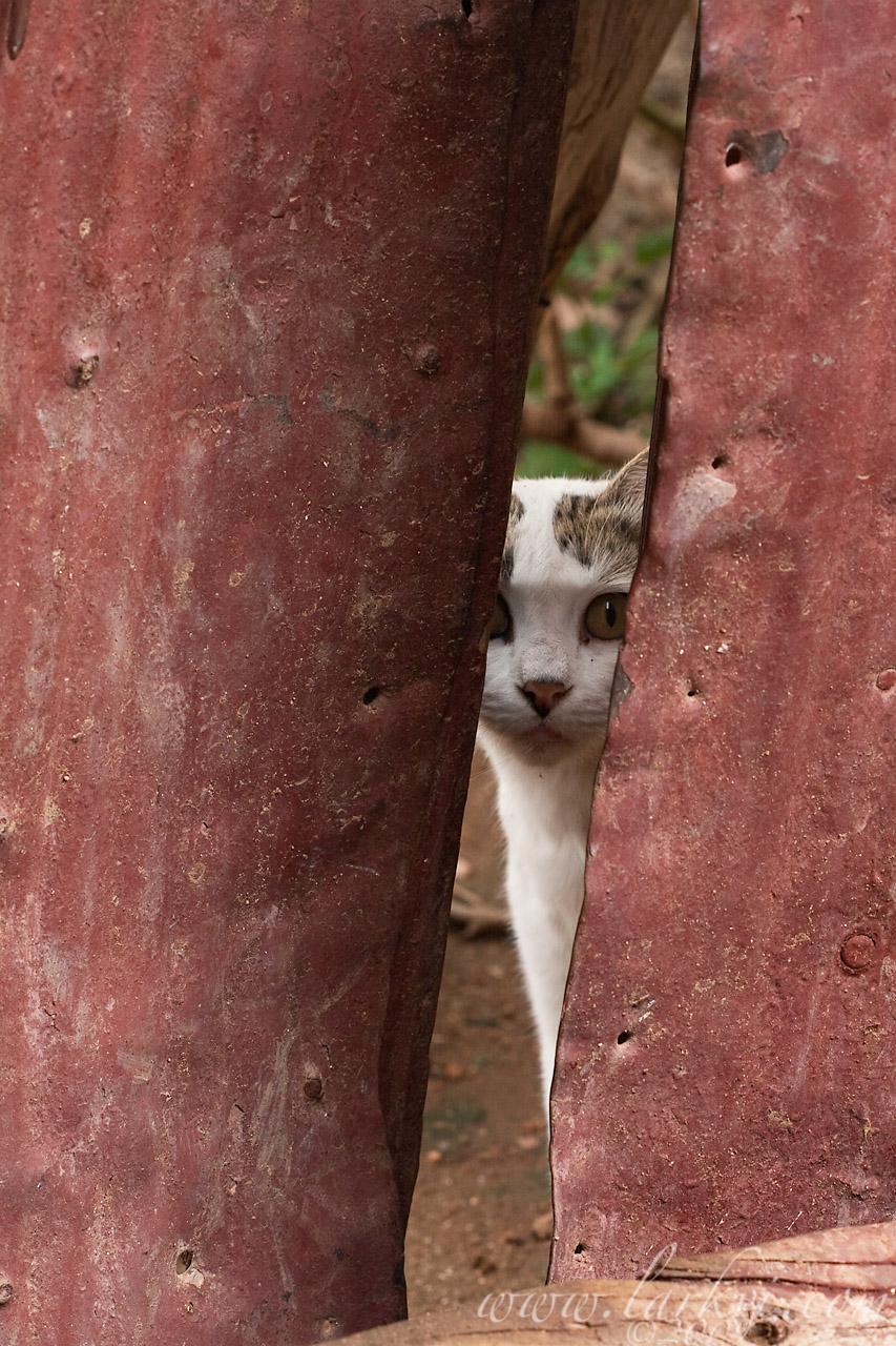 Cat #4(c), Harar, Ethiopia, July 2009