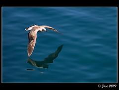 El vuelo de la gaviota (Josepargil) Tags: puerto mar agua asturias reflejo gaviota cudillero vuelo josepargil