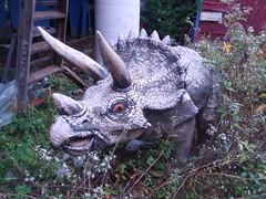 cracking triceratops