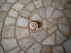 Descentrado (Bellwizard) Tags: shell snail concha caracol cargol closca descentrado descentrat