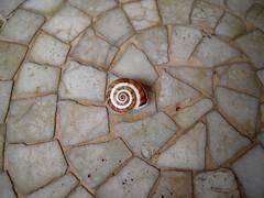 Descentrado (Bellwizard) Tags: shell snail concha caracol cargol closca descentrado descentrat