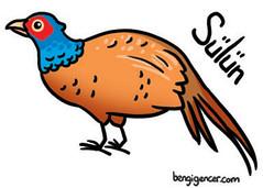 Pheasant (bengi gencer) Tags: animal illustration pheasant characterdesign childrenillustration sln