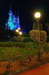 Rose Garden with Cinderella Castle at Night