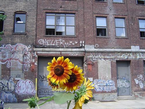 sunflower brick building