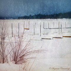 Off Season (SLEEC Photos/Suzanne) Tags: winter lake snow texture dock weeds nikon frozenlake tistheseason d300 coth theworldwelivein boatslips bigbearlakecalifornia visiongroup dragondaggerphoto artistictreasurechest miasbest daarklands aworldmadeoftextures
