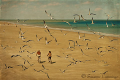 On the Beach (SLEEC Photos/Suzanne) Tags: ocean beach birds georgia cyclists tybeeisland textured blackskimmers flypapertextures shadowhousecreationsskeletalmesstextures