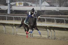 _MG_5691 (thinktank8326) Tags: thoroughbred racehorse racetrack equine horse hawthorne illinois canon eos 7d