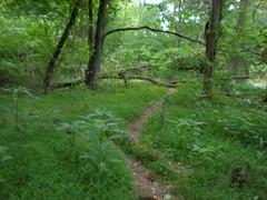 9 - Lush Vegetation