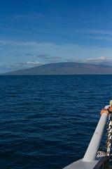 Pacific Whale Watch - Lahaina -3 (earth_princess) Tags: maui whalewatch fluke breach