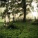 Stary Cmentarz w Łodzi we mgle