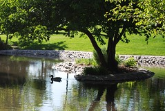 Duck Shadows (Edgar Zuniga Jr.) Tags: park city trees grass creek ducks refelction