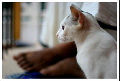 The Pet (Midhun Manmadhan) Tags: pet love home cat 50mm prime dof perspective warmth master relationship athome shelter selectivefocus poocha canoneos400d