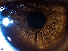 Human Eye Pupil! Extreme Macro Version! (q8phantom) Tags: macro eye eyes super human pupil  extrememacro   raynox250     magnifyed