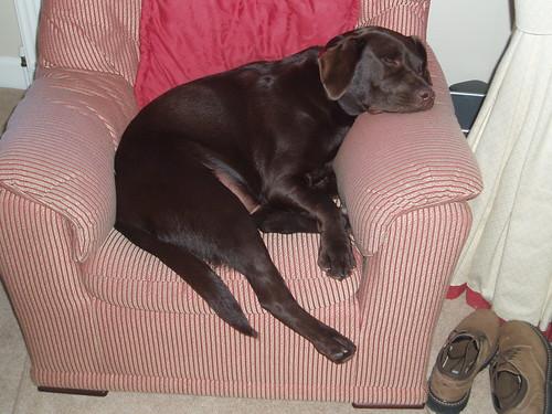 Rolo relaxing