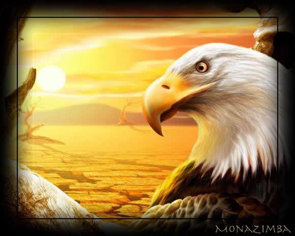 aigle,conte amerindien,desir,voler,belle image