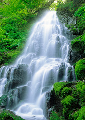 "Fairy Falls - waterfall in Columbia River Gorge, Oregon (IronRodArt - Royce Bair (""Star Shooter"")) Tags: mist green fall nature water misty oregon creek river landscape flow outdoors waterfall moss spring promo stream natural outdoor top columbia falls fresh clean fairy waterfalls gorge flowing lush splash delicate lacy pure refreshing cascade mossy cascading pristine splashing refresh chlorophyll"
