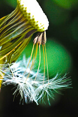 Gone with the wind (tibchris) Tags: goldengatepark colour macro colors nikon colours bright vivid upclose d700 goldengate4 tibchris arcticpuppy snapchris wwwsnapchriscom