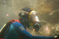 Diver cleaning tank in Tropical Diver exhibit