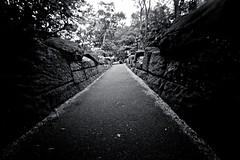 Every day is a journey, and the journey itself is home. ~Matsuo Basho (Chendur) Tags: york city newyorkcity newyork centralpark manhattan midtown chendur chendurphotography chendurvenkatraman chendurvenkataramanphotography chendurvenkatramanphotography