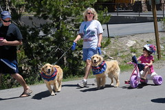 Calla LC Maggie marching in parade on 4th of July at Serene Lakes-05 7-4-09_resize (lamsongf) Tags: california dog goldenretriever calla maggie area summit lc donner goldenretiever serenelakes donnersummit