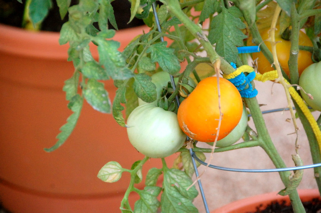 our first fruits
