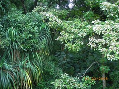 Inside Tropical Rainforest (Designer Michael) Tags: island hawaii oahu tropicalisland tropicalparadise tropicalrainforest hawaiianvacation lushvegetation islandvacation